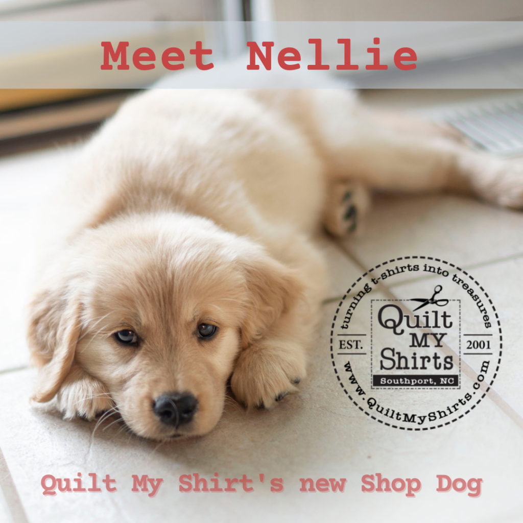 Nellie_shop_dog